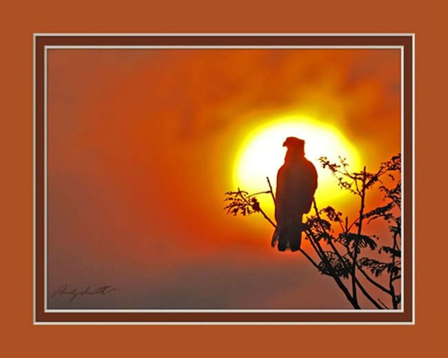 Caracara at Sunset