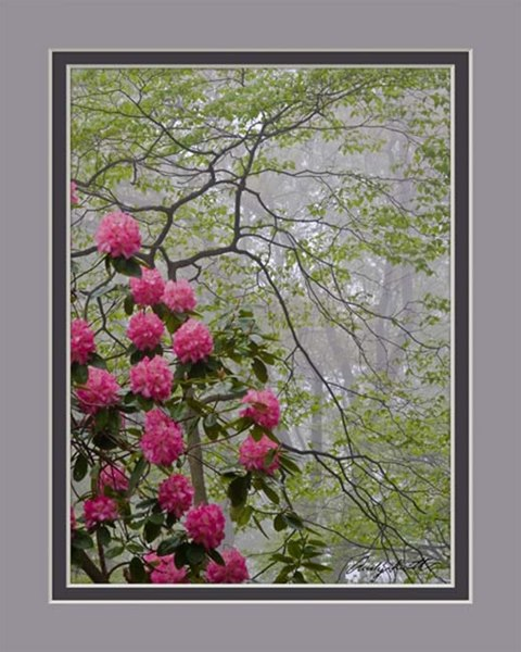 Rhododendron on a Foggy Morning