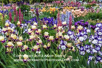 Shreiner's iris Gardens