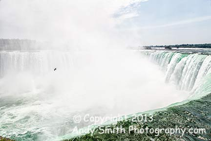 Cormorant in the mist over Horseshoe Falls