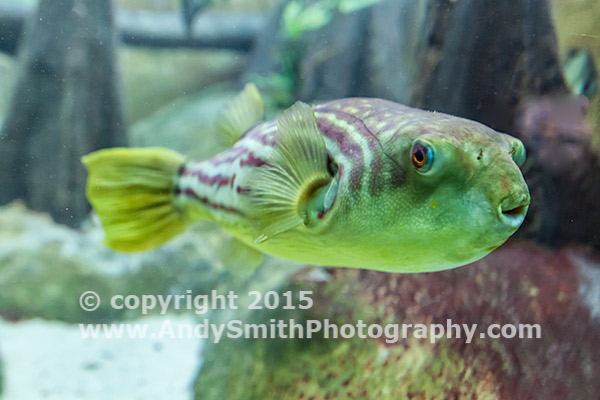 Captive Fish in Shedd Aquarium